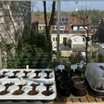 Tales from my home office III: Sowing the seeds